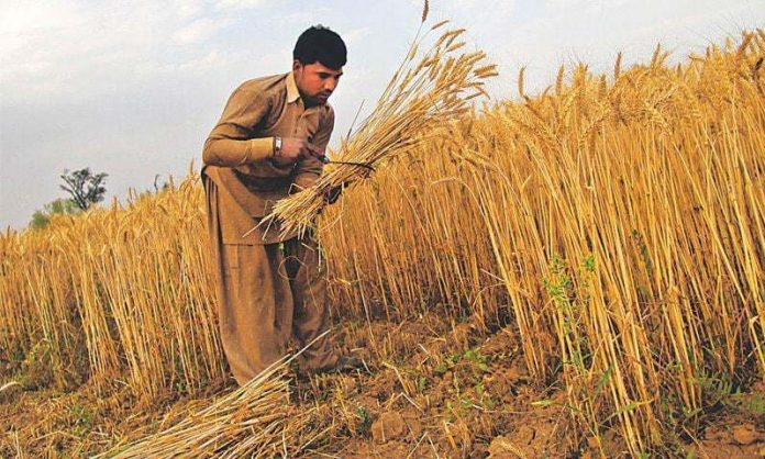Govt likely to withdraw subsidy on agri inputs